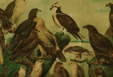 video: Ornitologové sbírají data